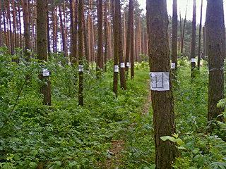 Посадка деревьев в Области http://lovesun.by