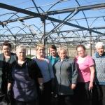 Овощная фабрика 2014