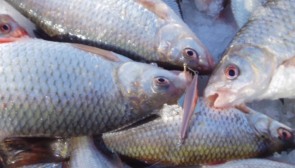 Рыба, рыбалка