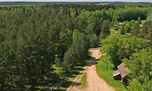Лес, Беловежская пуща