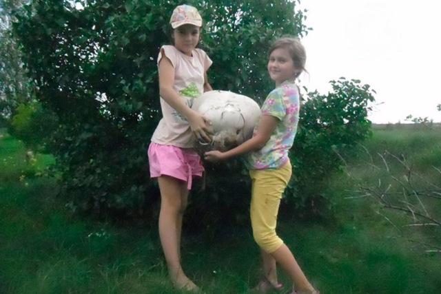 Светлогорские школьницы нашли гигантский гриб