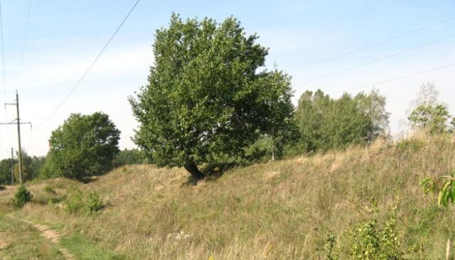 вал городища, осень 2014. Якимова Слобода (лес, деревья)