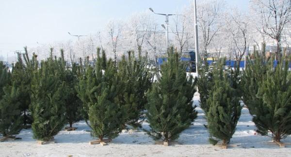 елка на НГ
