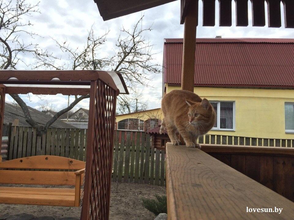 03.04.2015 домовладение в Чирковичах 2 кот