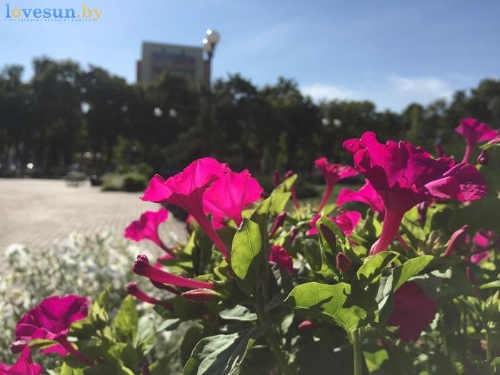 Фонтан после реконструкции цветы возле ГЦК IMG_6135
