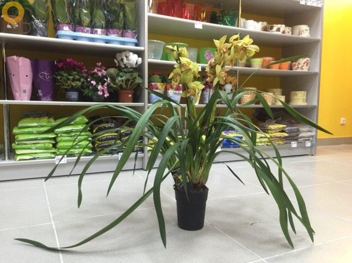 Магазин цветов и сувениров в Берёзках 12