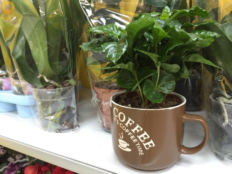 Магазин цветов и сувениров в Берёзках кружка кофе