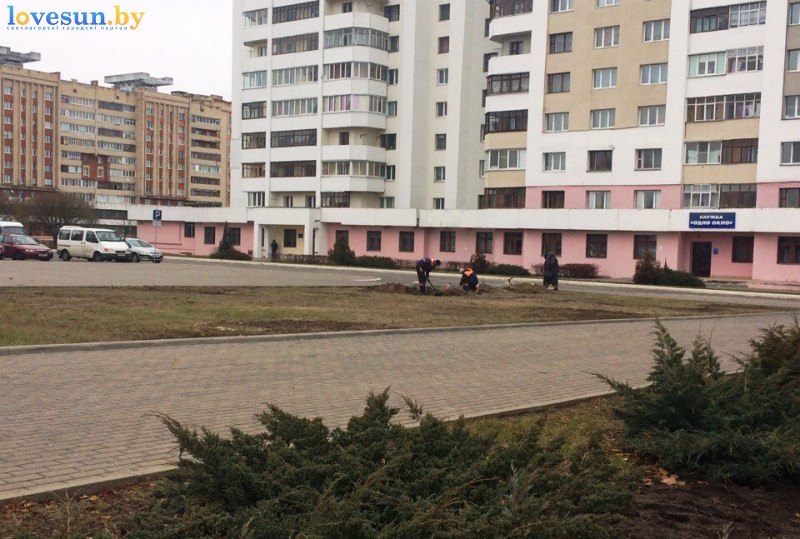 derevya-vozle-rovd-2