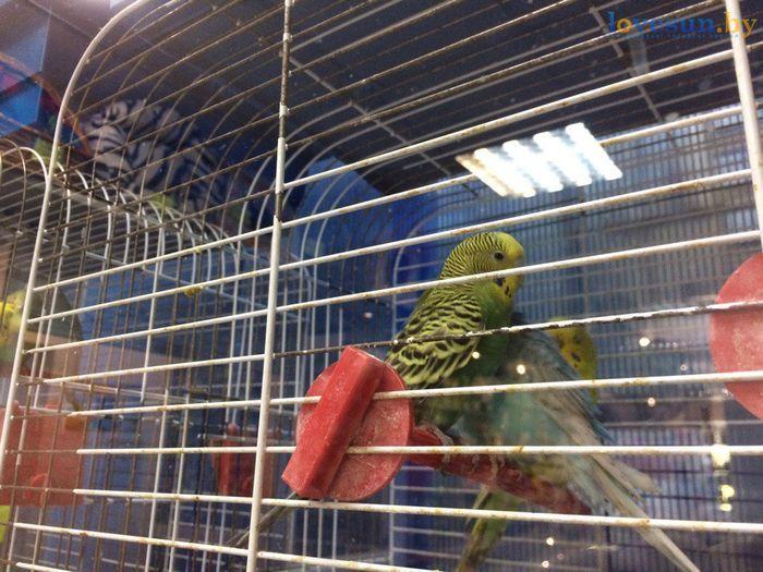 торговый центр Пассаж роодпжп товары магазин папугай