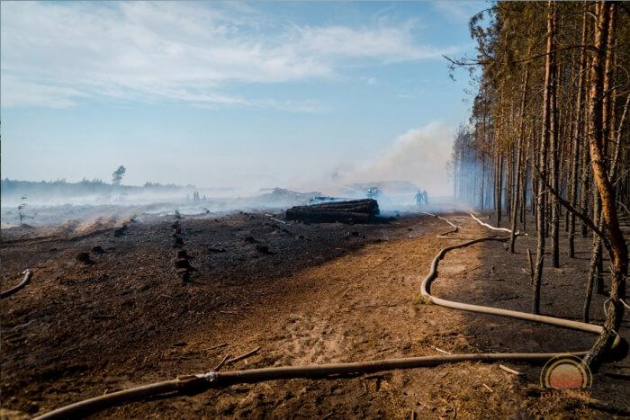 Пожар горит лес деревья 02.08.2017 выгоревшая земля