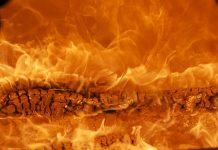 пожар огонь горит дерево