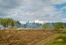 Вырубка леса в Светлогорском районе из-за короеда 2017