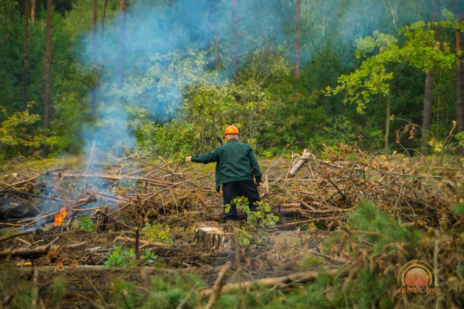 Вырубка леса в Светлогорском районе из-за короеда 2017 лесхоз горит