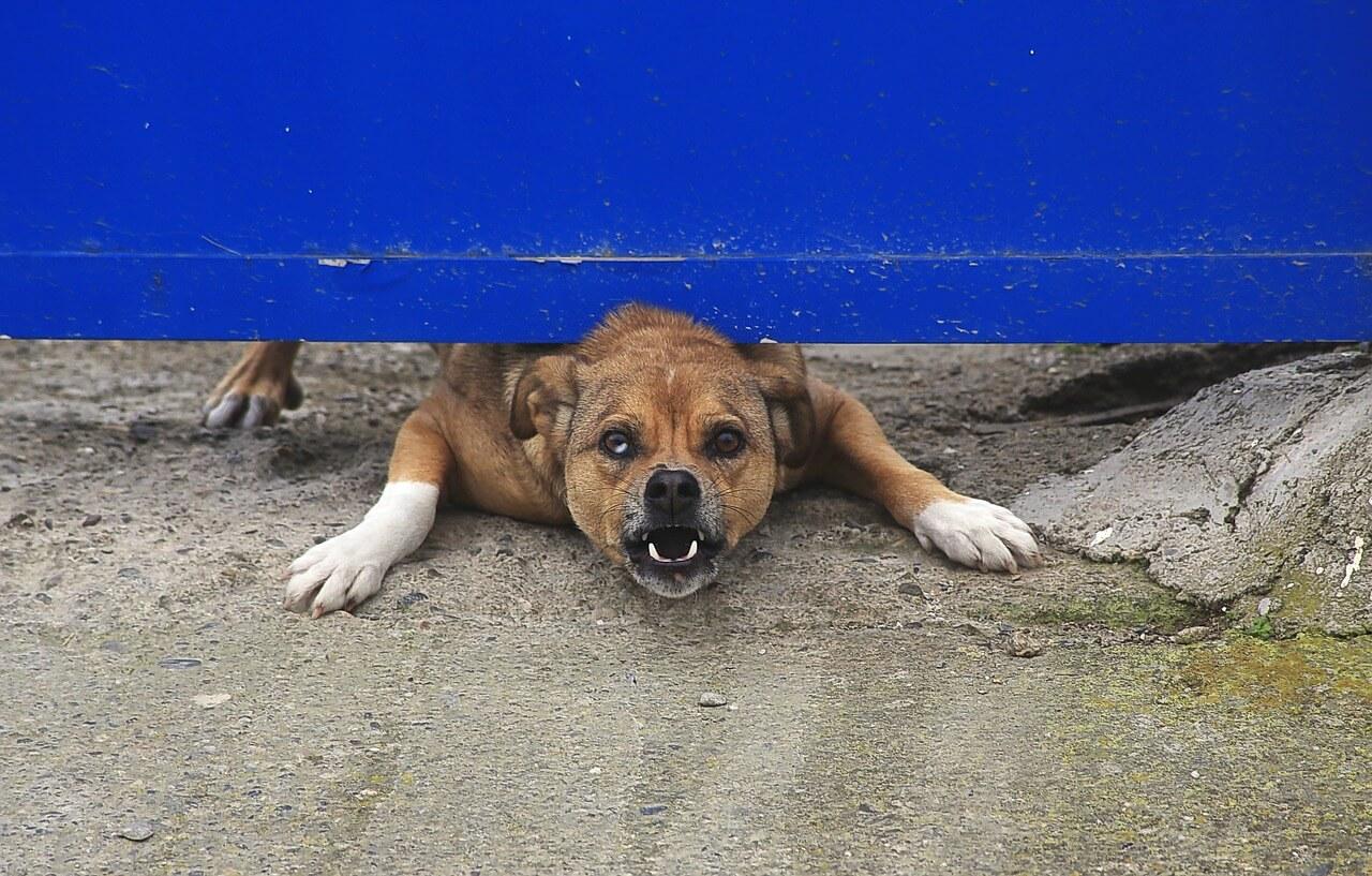 Злая собака под калиткой хочет покусать