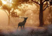 олень дикое животное в лесу