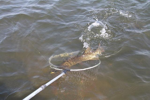 ловля рыбы, щука в пацаке сочке река