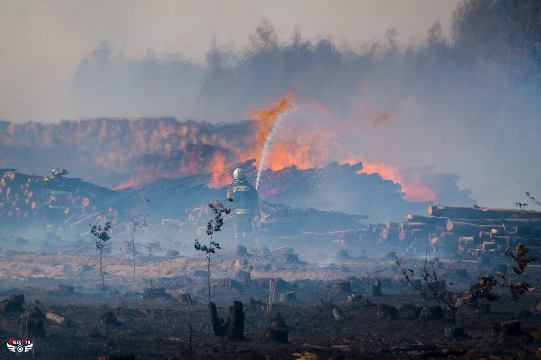 Пожар горит лес деревья 02.08.2017 ствол пламя