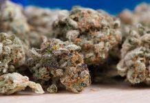 каннабис конопля марихуана наркотик крим