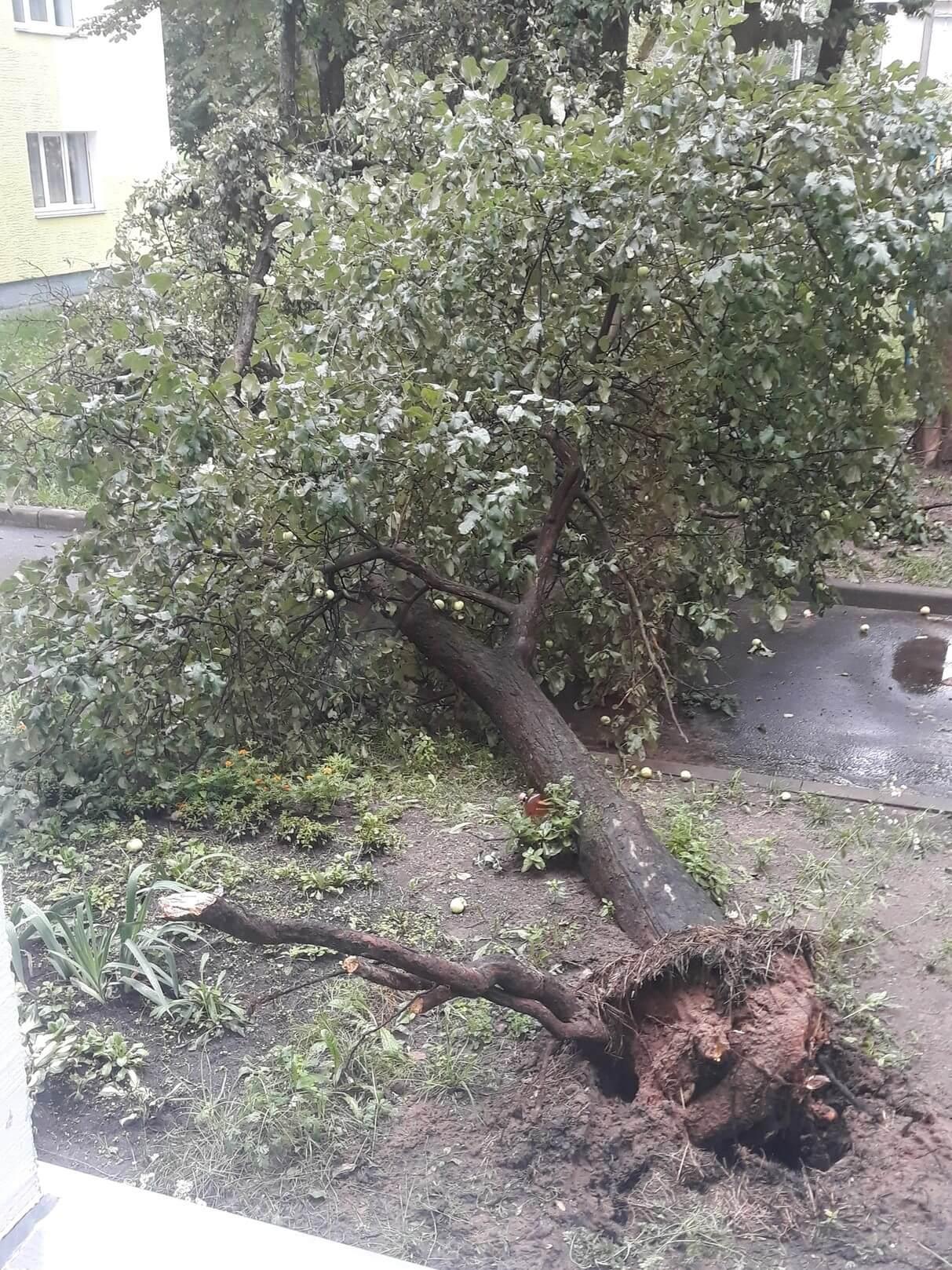 вырванное дерево с корнями (1)