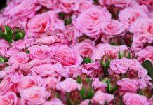 Розы цветы