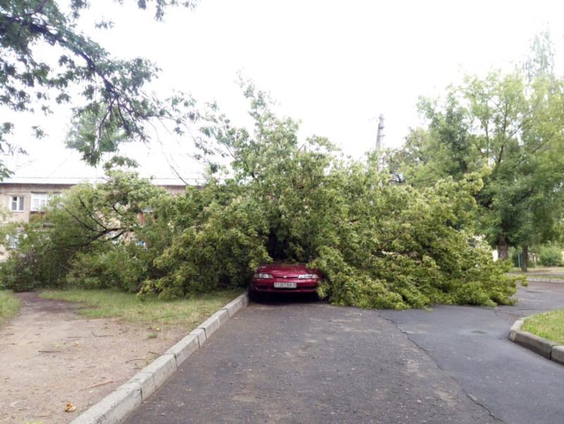 машина под деревом