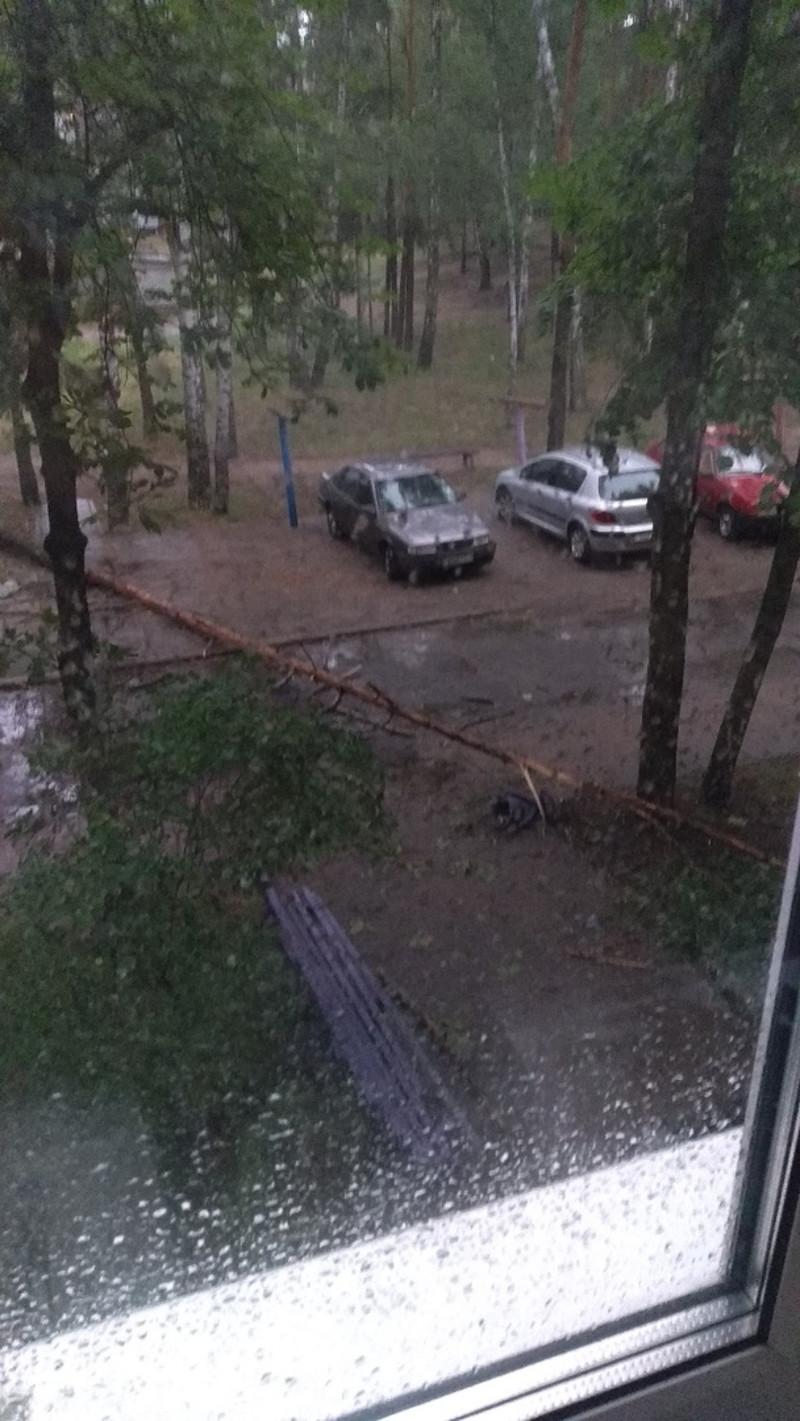 Поваленное из-за ветра дерево