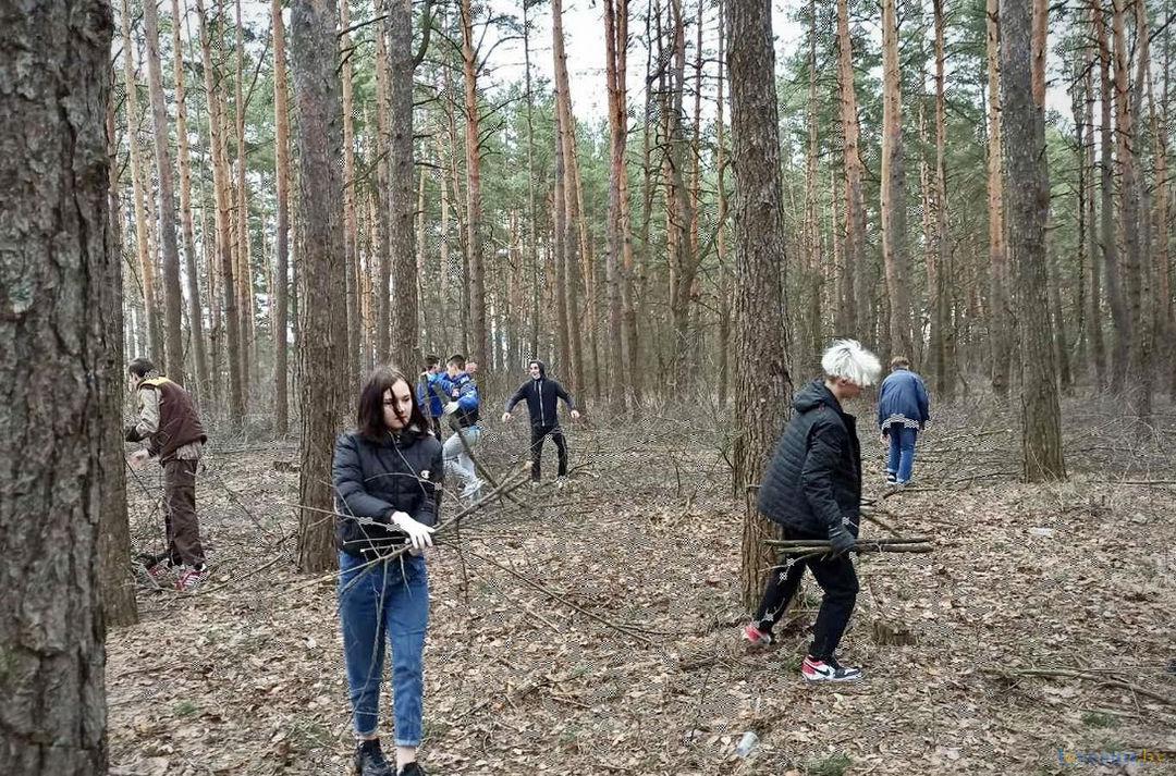 уборка в лесу